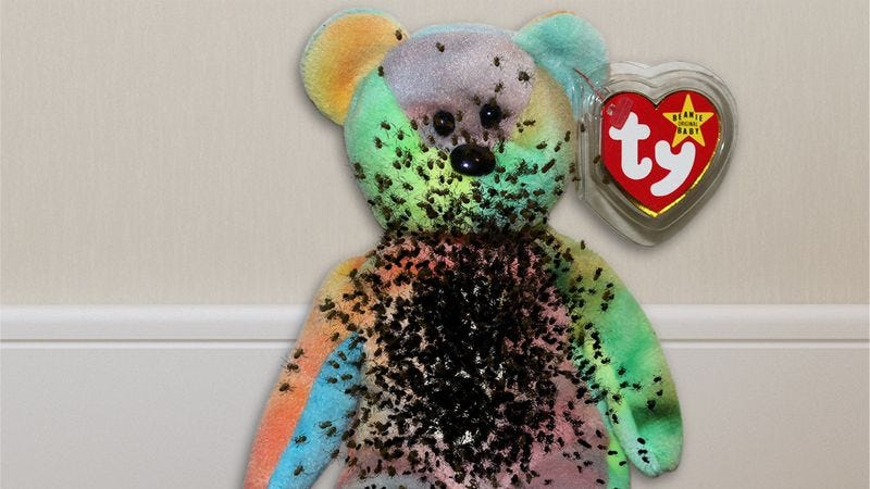Illustration for article titled '90s Kids Rejoice! The Spider Eggs They Used To Fill Beanie Babies Are Finally Hatching!