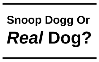 "Illustration for article titled Let's All Play ""Snoop Dogg or Real Dog?"""