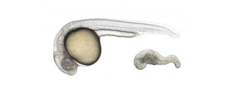 Illustration for article titled Stem Cell Researchers Just Figured Out How to Create New Embryos