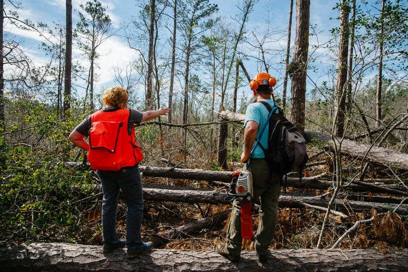 The Race To Save The Most Endangered Conifer In America