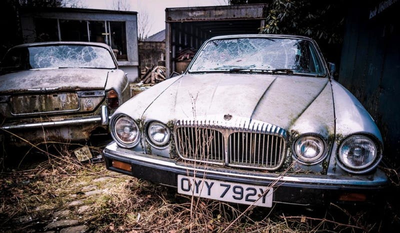 Illustration for article titled This Jaguar Graveyard Is Hauntingly Beautiful