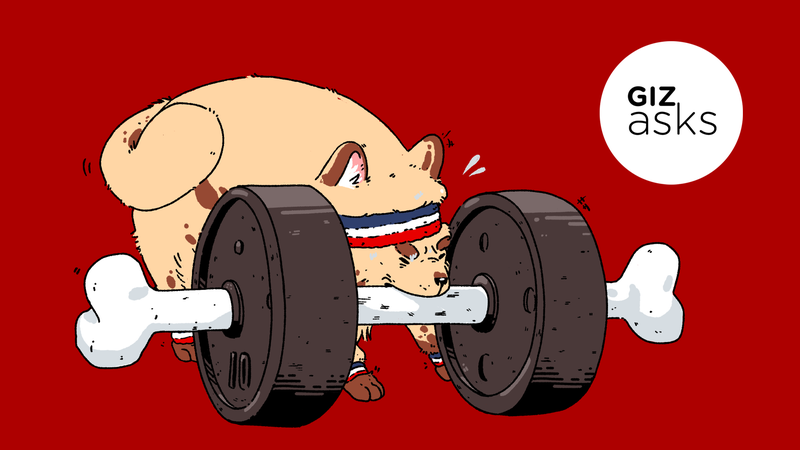 Illustration for article titled Do Animals Work Out?