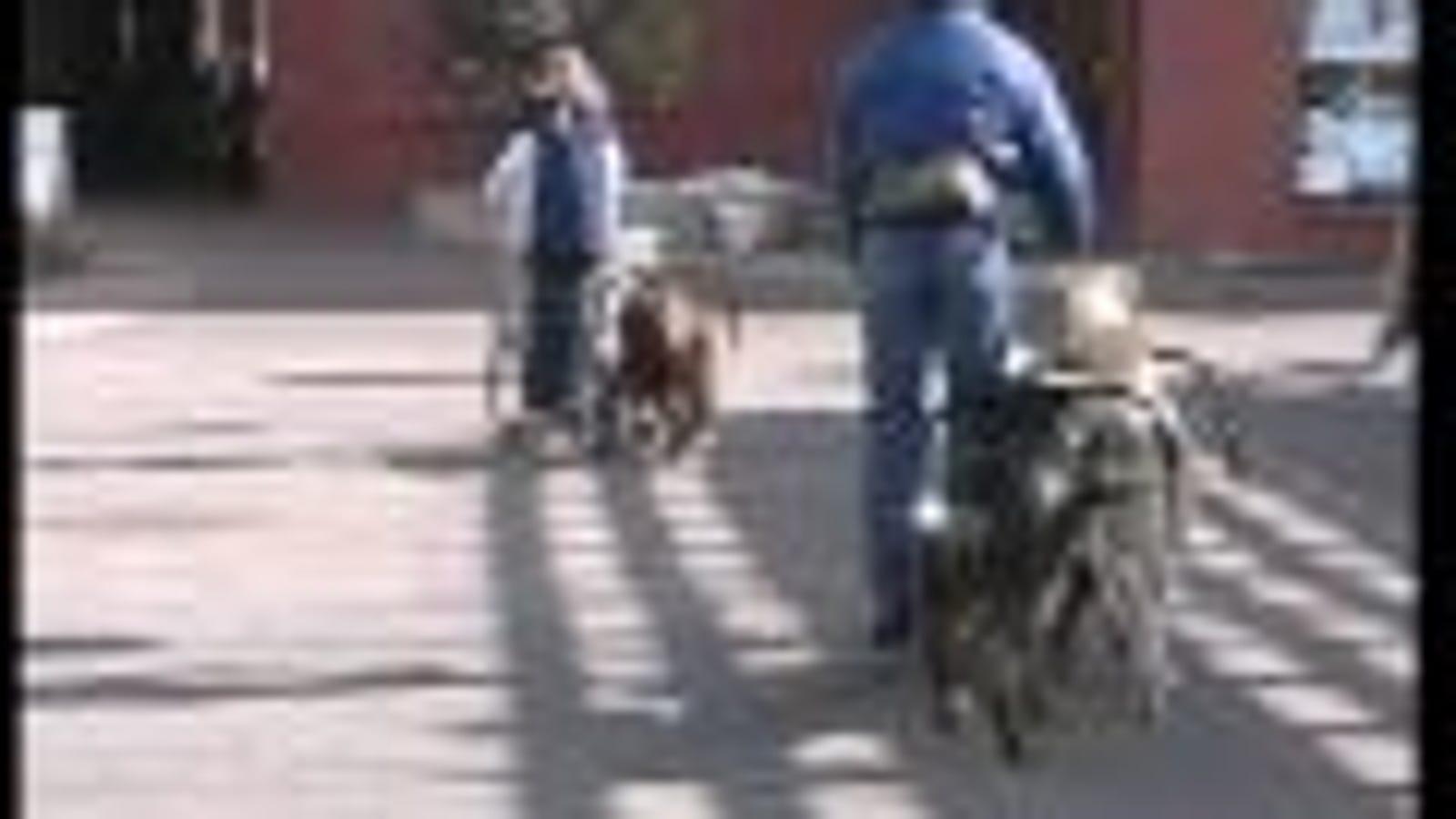 Llega el scooter de propulsión canina