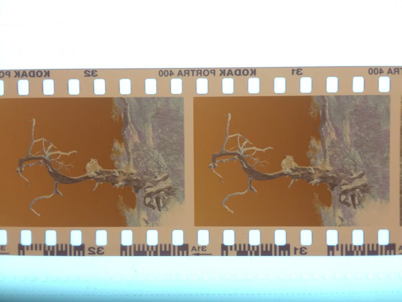 Illustration for article titled Primer: Scanning Film