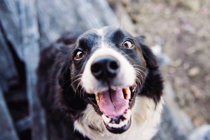 Estas son las razas de perro más y menos inteligentes del mundo según un psicólogo canino