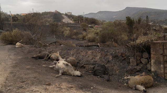 'It's a Miracle That We Are Still Alive': Inside Sardinia's Terrifying Firestorm