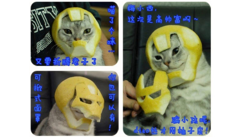 Illustration for article titled This Iron Man Helmet Was Made of Grapefruit. For a Cat.