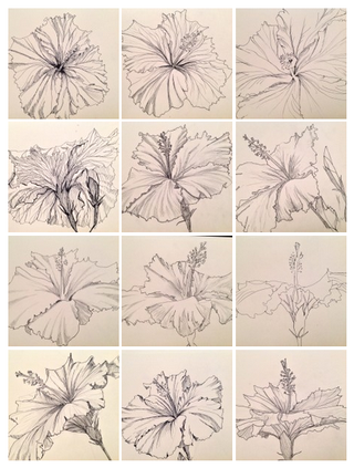 Illustration for article titled How To Draw Hibiscus the Ultimate Gallery of Flower Power!