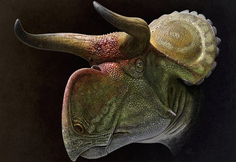 Illustration for article titled El misterio de los dinosaurios con cuernos parece resuelto, y su explicación es más simple de lo que se pensaba