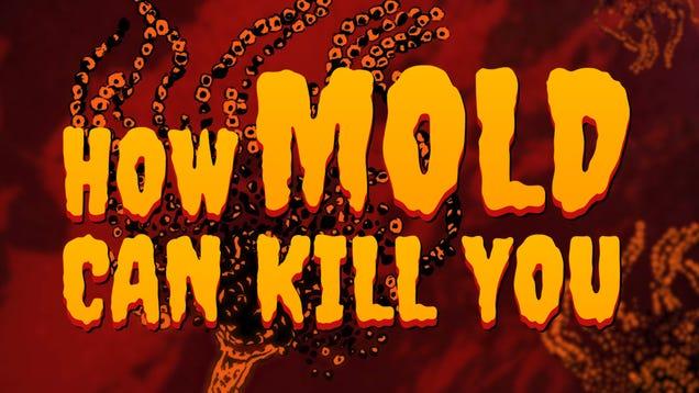 How Mold Kills