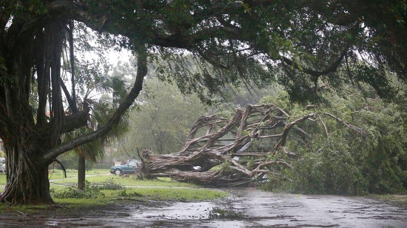 Storm damage in Coral Gables, Florida. Photo: AP