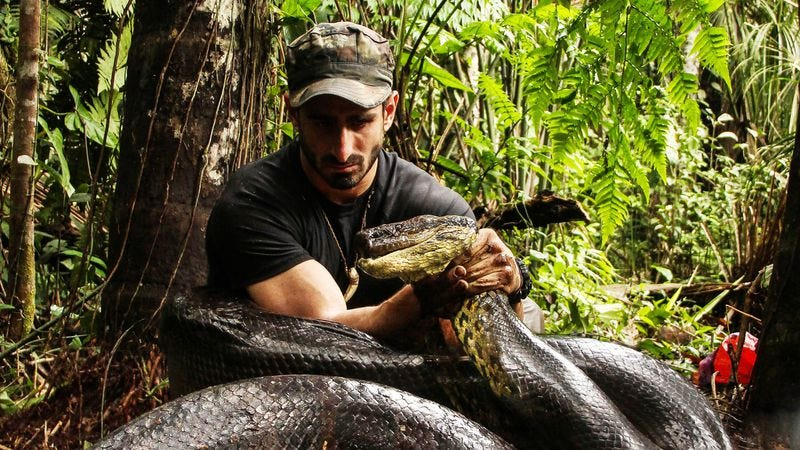 Illustration for article titled Television, perfected: Discovery feeds a man to a giant snake
