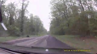 Dashcam Thursday: Bear Crossing Edition