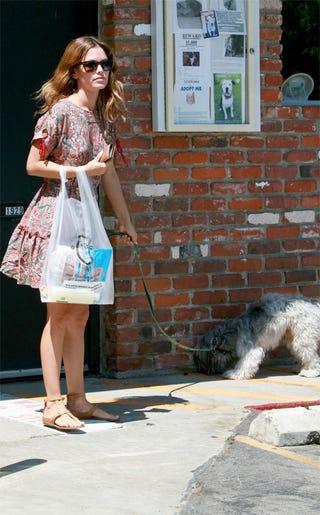 Illustration for article titled Rachel Bilson Lets Dog Slurp Up Streetside Leftovers