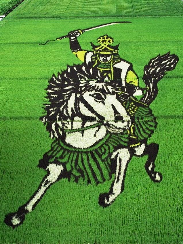 Un pueblo japonés convierte sus campos de arroz en dibujos gigantes