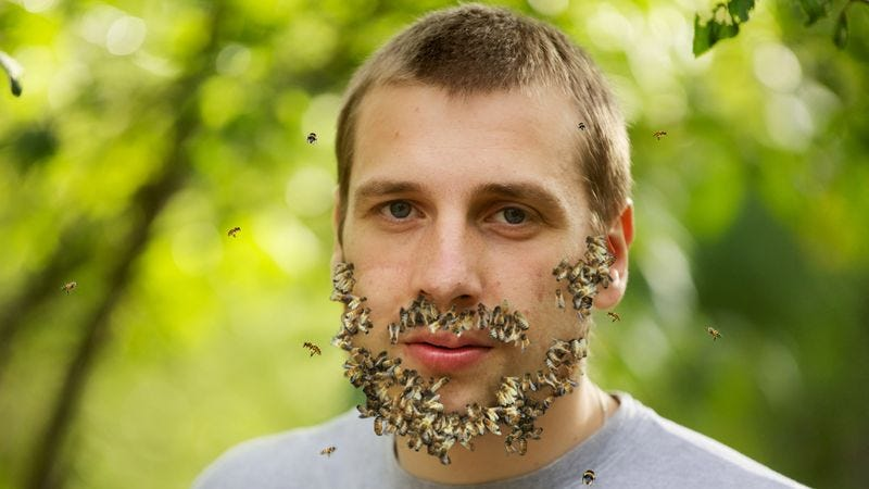 Illustration for article titled Man Has Trouble Growing Full Beard Of Bees