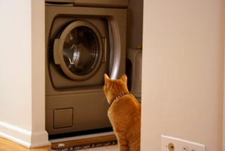 Illustration for article titled Cat Vs. Washing Machine (My Poor Cat Part II)