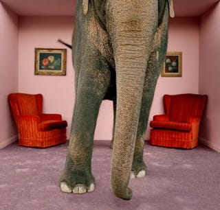 Illustration for article titled The Elephant in the Room This Thanksgiving