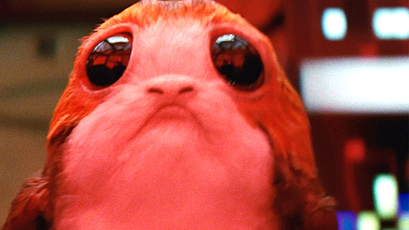Image: A porg, utterly devastated after hearing Rey doesn't care for its kind. Disney/Lucasfilm.