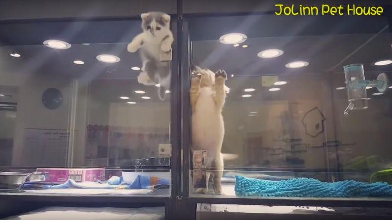 Photo: JoLinn Pet House