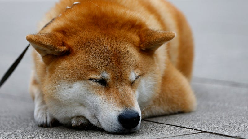 Reddit users lose real money after meme currency bot dies shiba inu photo ap solutioingenieria Choice Image