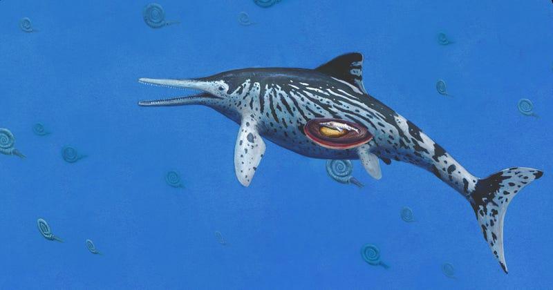 Artistic impression of Ichthyosaurus with embryo. (Image: Joschua Knuppe)