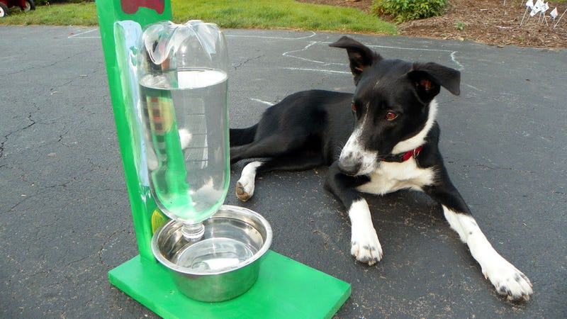 Illustration for article titled Make an Automatic Water Dispenser for Pets out of a Two-Liter Bottle