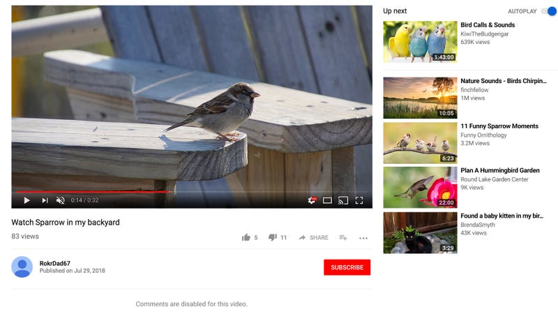 Illustration for article titled Comments Mysteriously Disabled On YouTube Video Of Sparrow In Yard