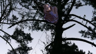 Illustration for article titled Very Tall Tree Wins Free Copy of Mass Effect 3