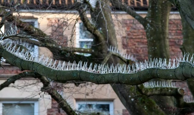Rich People Have Installed Anti-Bird Spikes in Trees to Keep Bird Poop Away from Cars