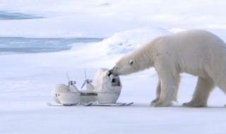 Illustration for article titled Watch Some Polar Bears Adorably Destroy a Nature Show's Spy Cameras