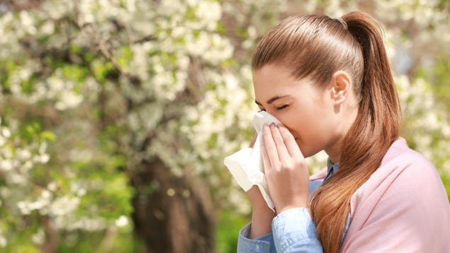How to Prepare for Allergy Season This Year