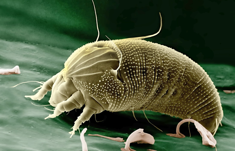parasite - photo #4