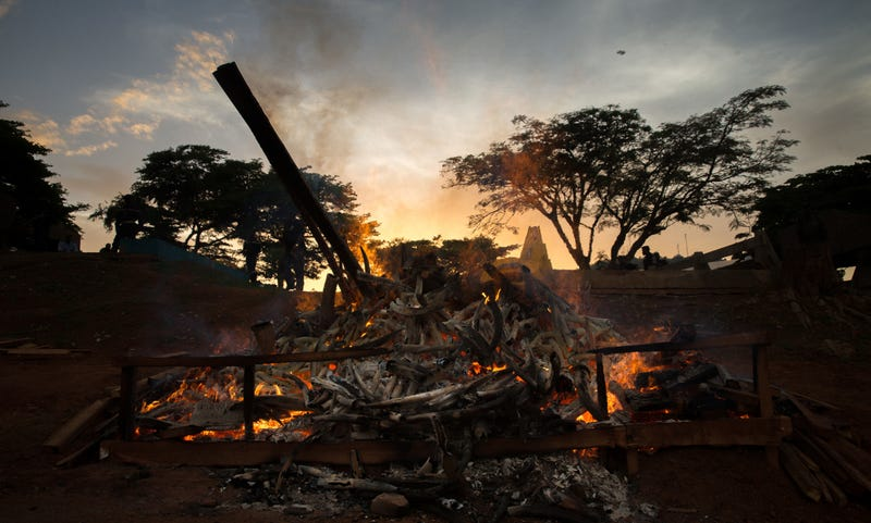 Sunset over a pile of burning elephant tusks, Cameroon. Image: Andrew Harnik/AP