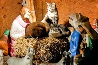 Illustration for article titled Feral Cats Oust Jesus