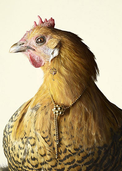 Illustration for article titled When chickens take over the Earth, they will dress in our jewels