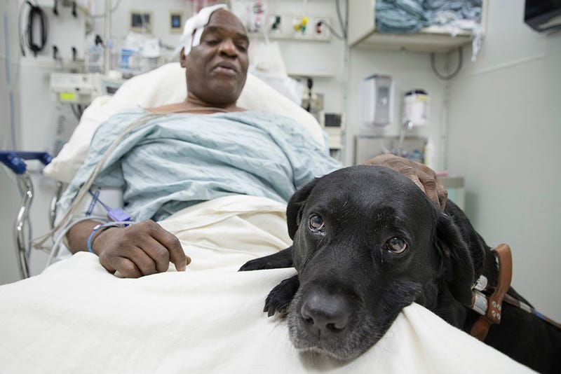 Illustration for article titled Heartbreak City: Blind Man and Dog Who Saved Him Might Be Separated [Updated]