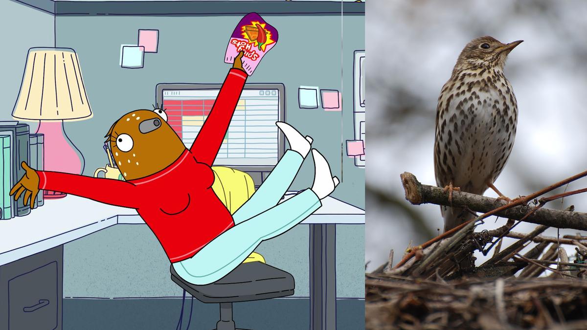 A Real Bird Watcher Watches Netflix'