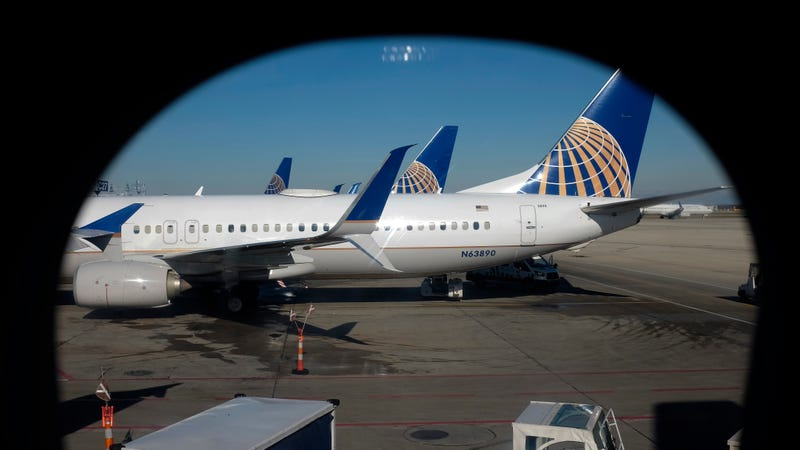 Illustration for article titled After Puppy Dies in Overhead Bin, United Airlines Mistakenly Sends Different Dog to Japan