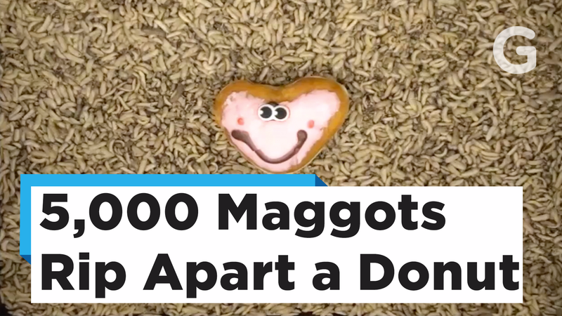 Illustration for article titled Send This Video of Maggots Eating a Heart-Shaped Donut to Your Love