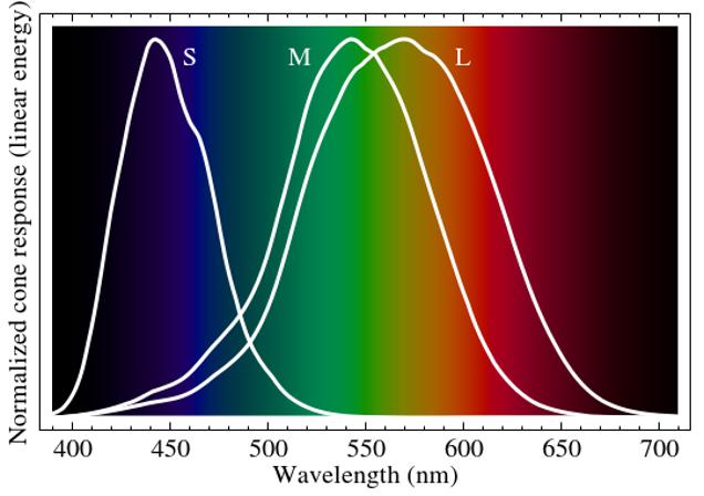e4c8d395e5e9 Typiske lysresponskurver for kegler i et menneskeligt øje. Billedkredit    BenRG   Wikimedia