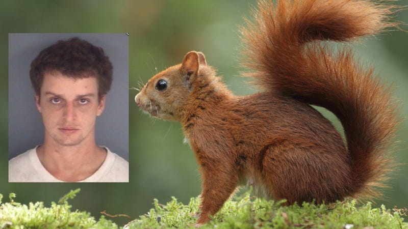 Illustration for article titled A Florida Man Was Caught Driving Drunk With A Squirrel In His Shirt