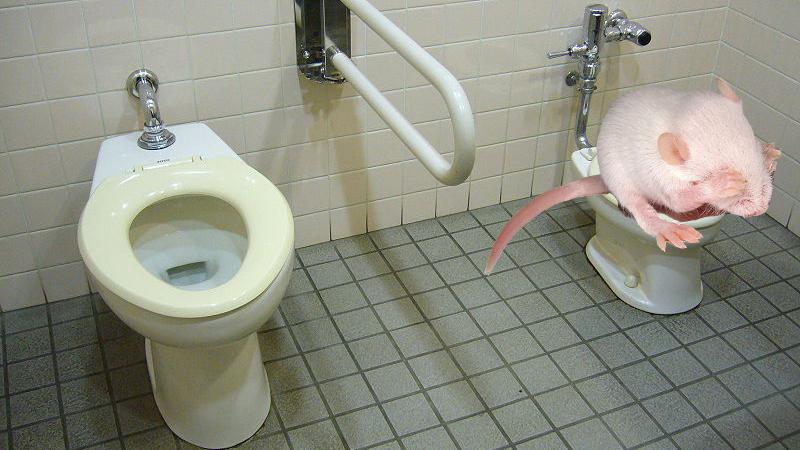 Watery diarrhea in toilet