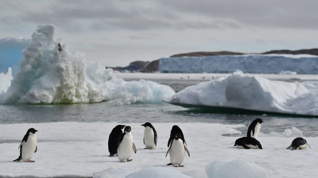 At Least Some Penguins Benefited From Record Antarctic Sea Ice Loss
