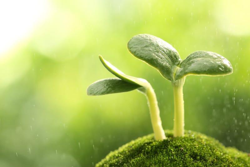 Illustration for article titled Científicos descubren que las plantas realizan cálculos matemáticos