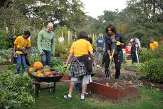 First lady Michelle Obama and White House chef Sam Kass (second from left) dig for sweet potatoes in the White House Kitchen Garden on Oct. 20, 2010, in Washington, D.C.MANDEL NGAN/AFP/Getty Images