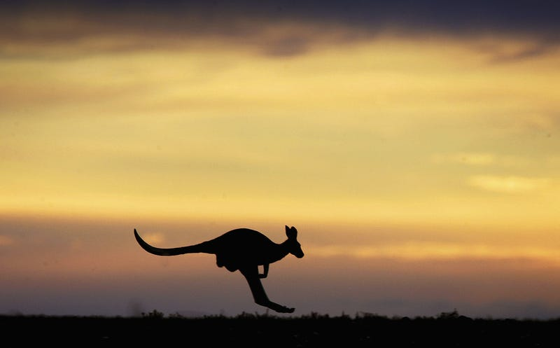 Pictured: A lesser kangaroo. (Photo: Ian Waldie/Getty Images)