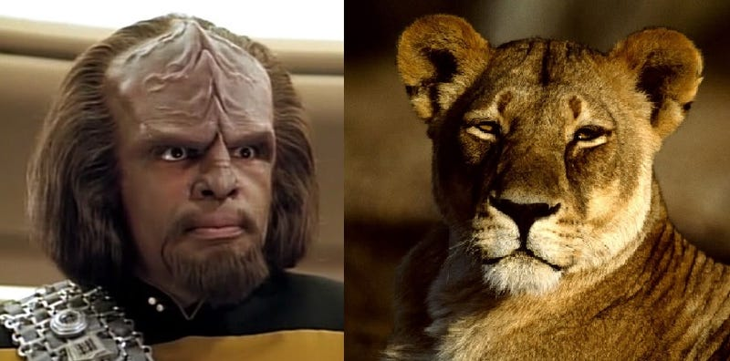 Illustration for article titled Lions are becoming the Worf of the animal kingdom
