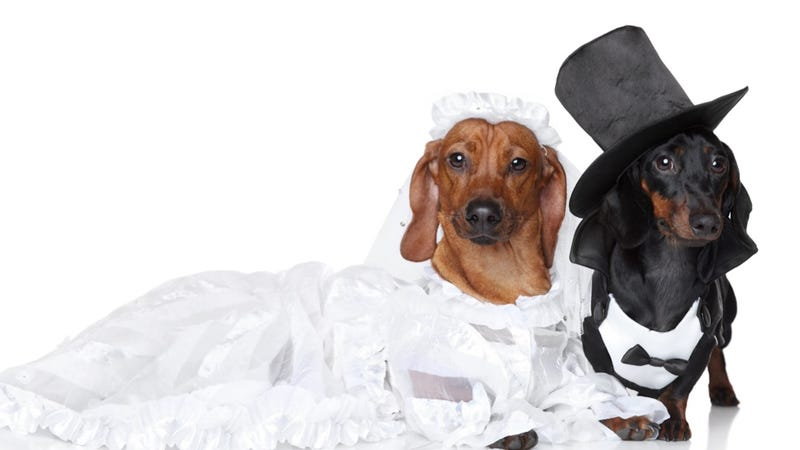 Illustration for article titled Another Official Dog Wedding Mocks Commitment-Averse Humans