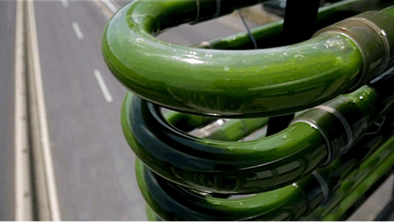 Un genial experimento: cultivar algas en autopistas para reciclar CO2